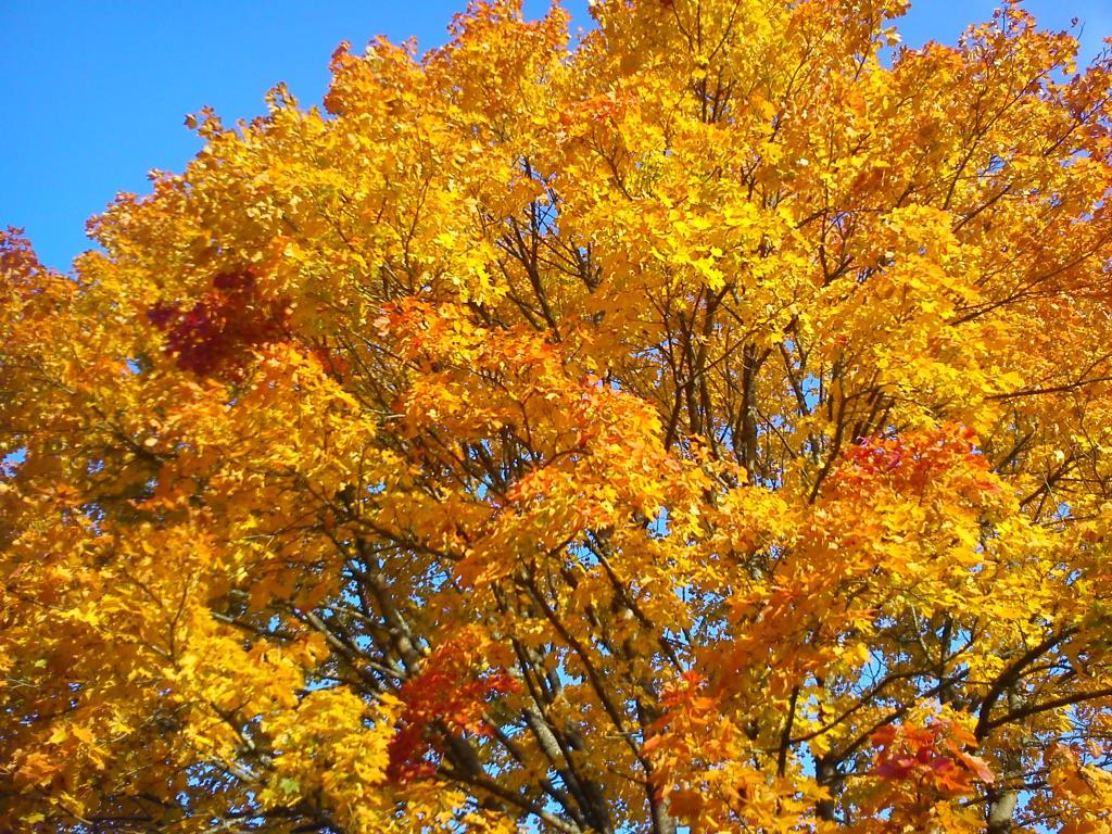 oсень. Лесной пейзаж