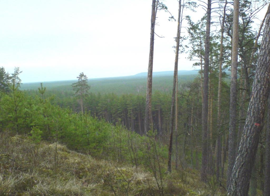 лесные дали. Лесной пейзаж