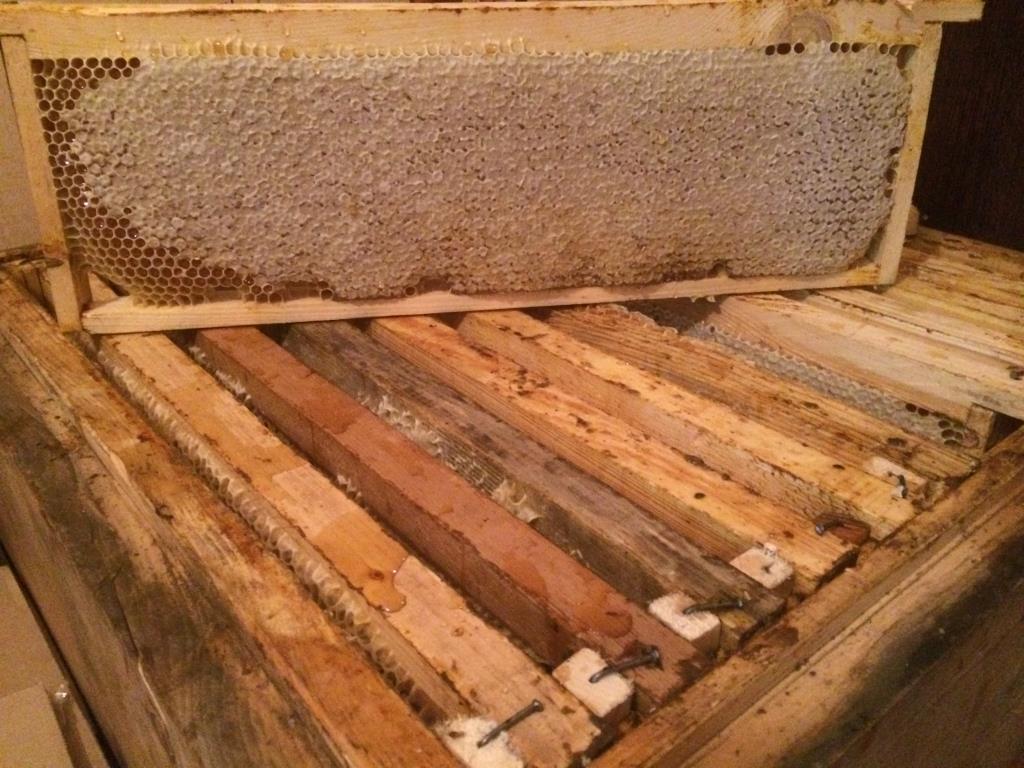 Мед в сотах. МЕД и продукты пчеловодства