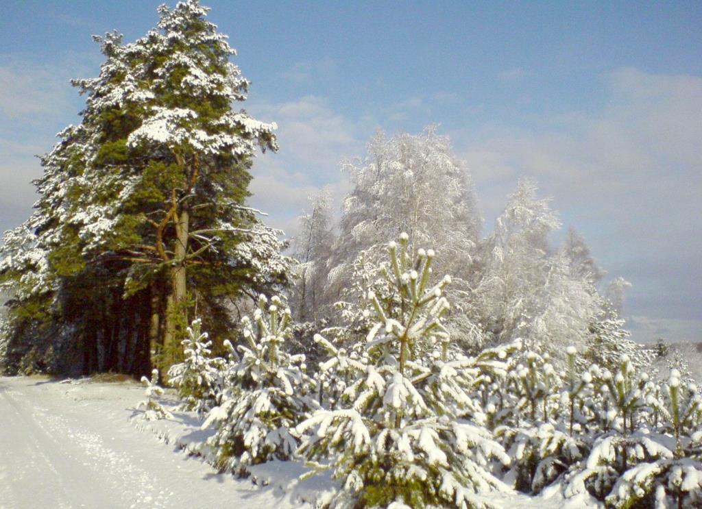 зима в лесу. Лесной пейзаж