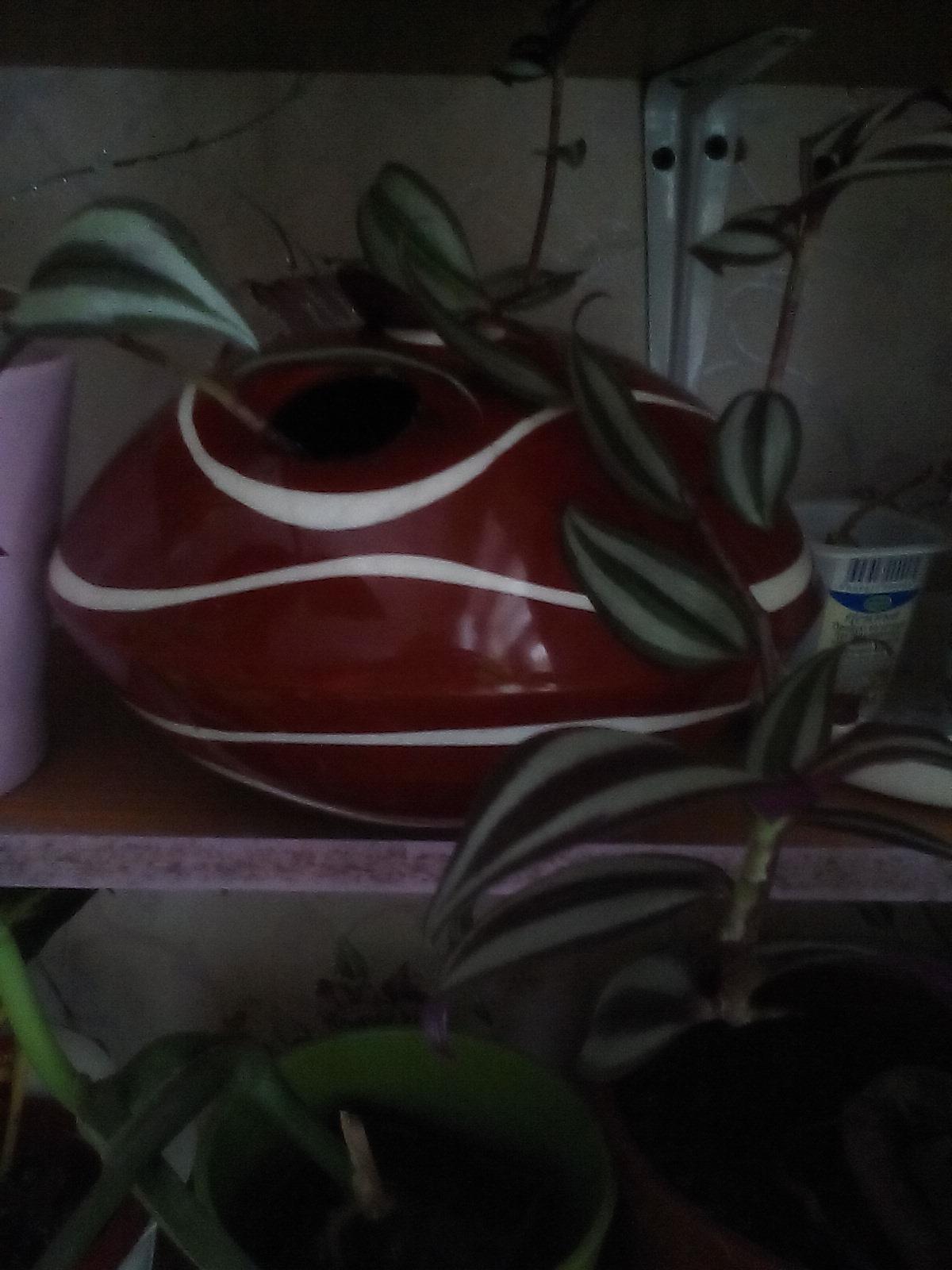 Традесканция Зебрина в овальной вазе. Растения комнатные