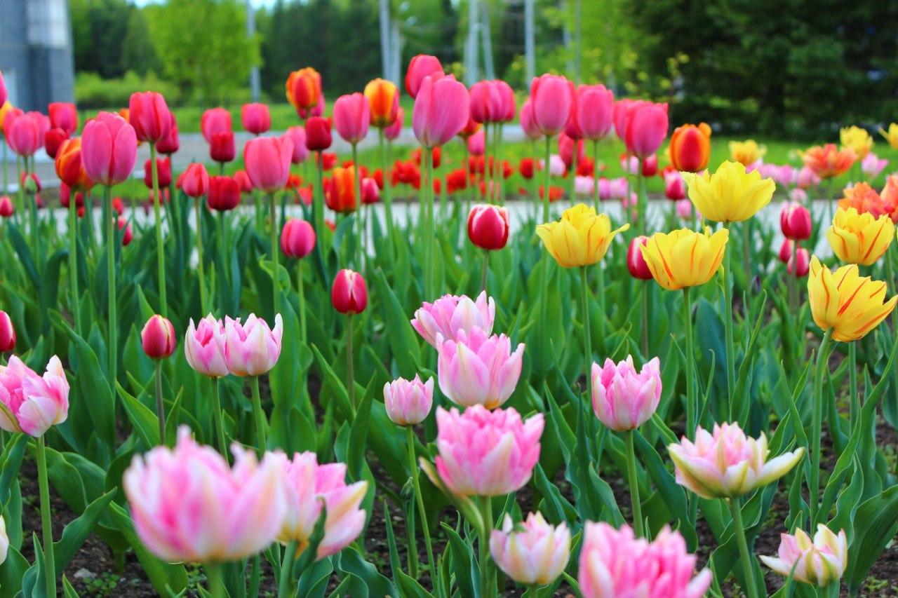 Весна.... Блиц: весна!