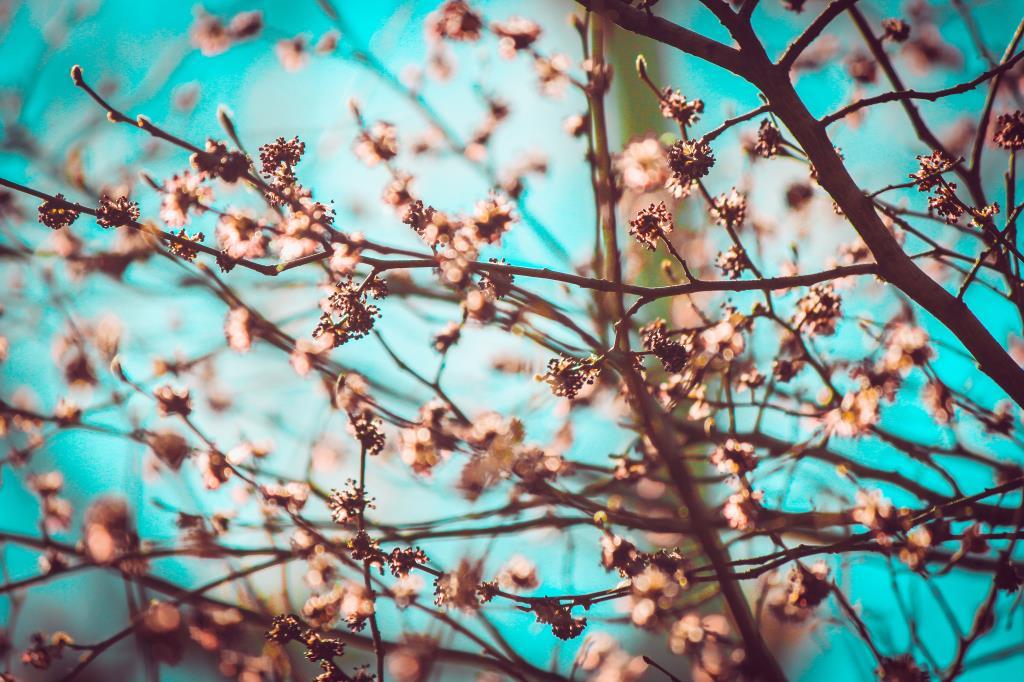 весеннее цветение. Блиц: весна!