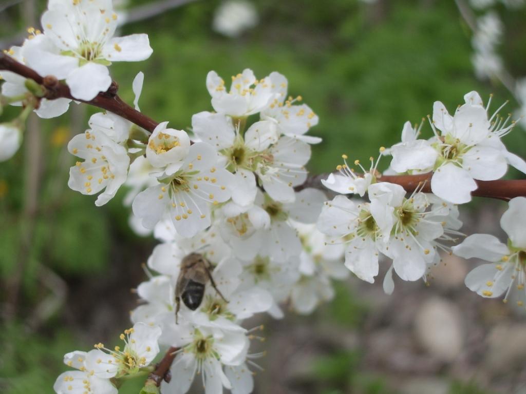 Вот и пчелкам работы прибавилось.... Блиц: весна!