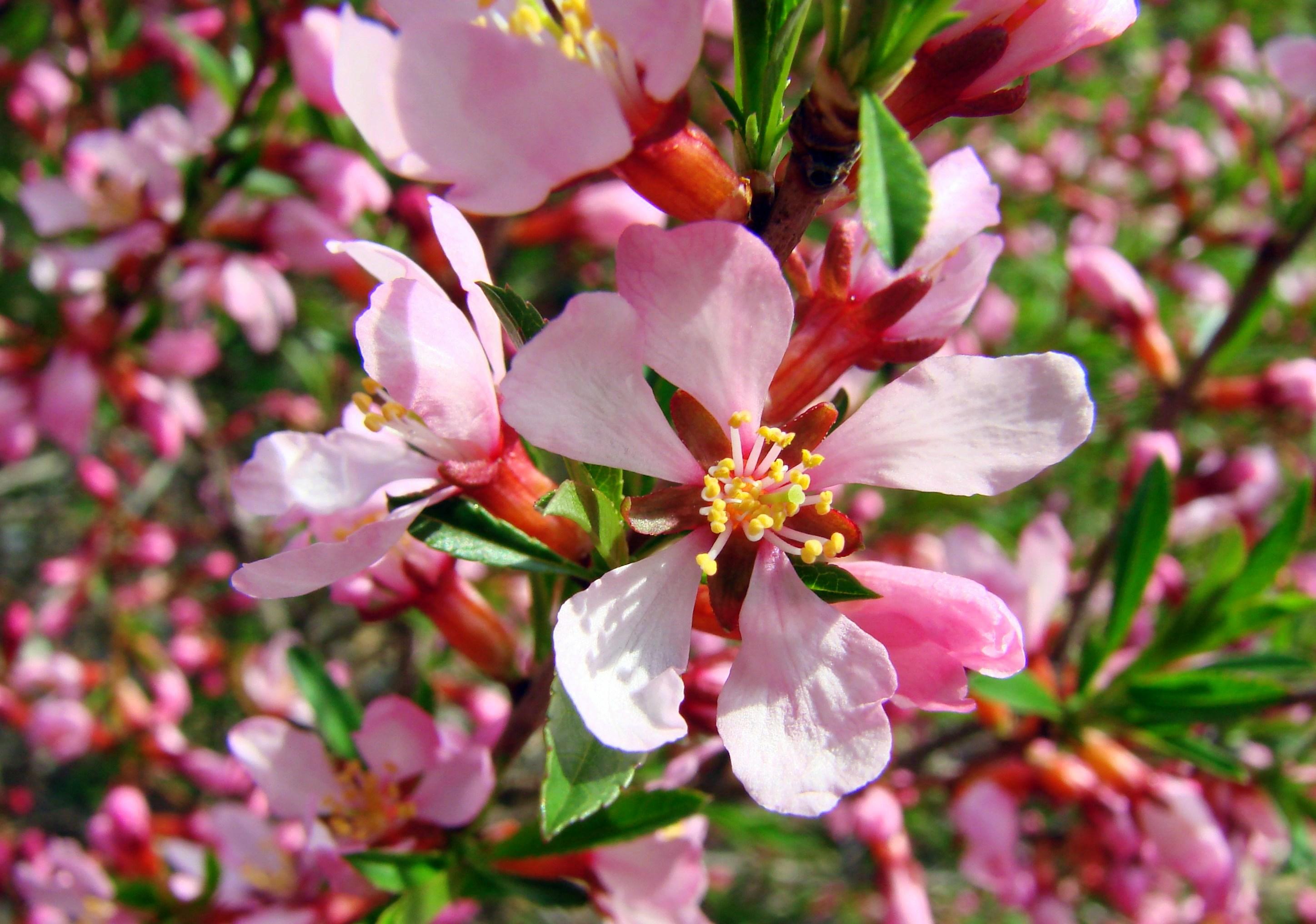 Один раз в год сады цветут...(с). Блиц: весна!