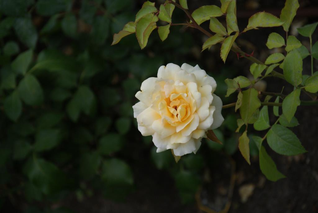 Жёстый цветок. Блиц: желтое