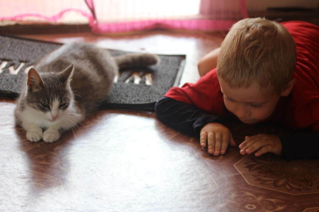Кошачья школа.