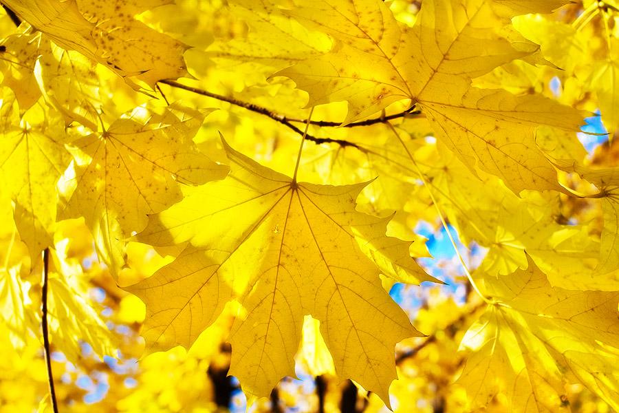 Солнечная осень. Блиц: желтое
