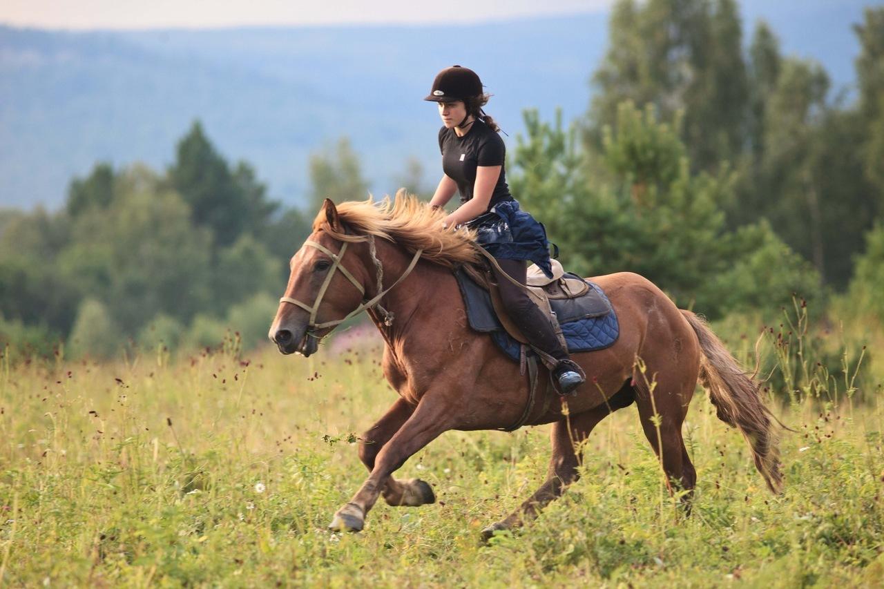 тесту картинки с лошадьми и всадниками итоге грим