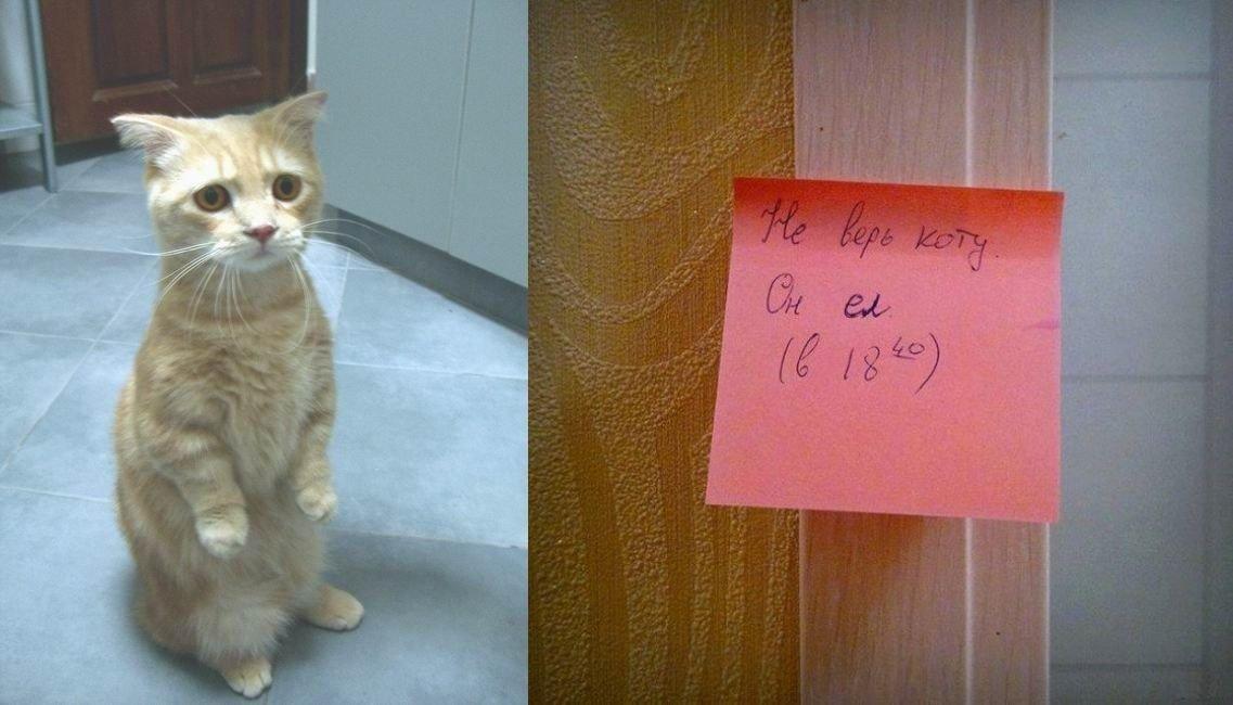 Не верь коту.