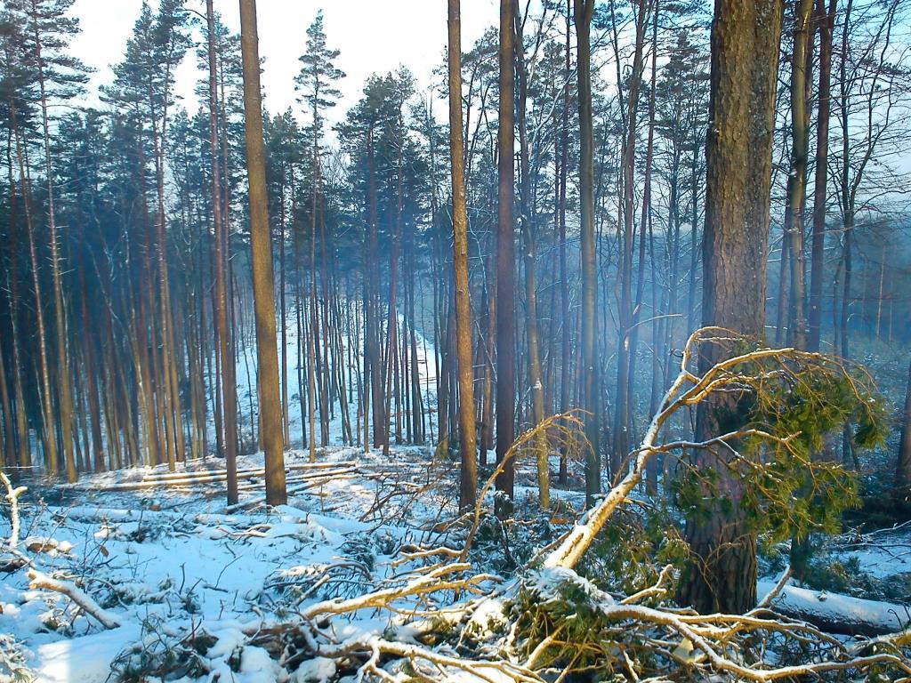 лесосека . Лесной пейзаж