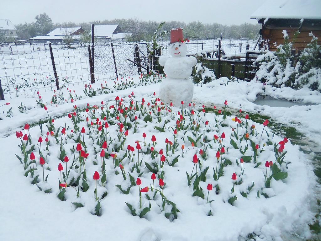 прикольные фото снег в мае купить