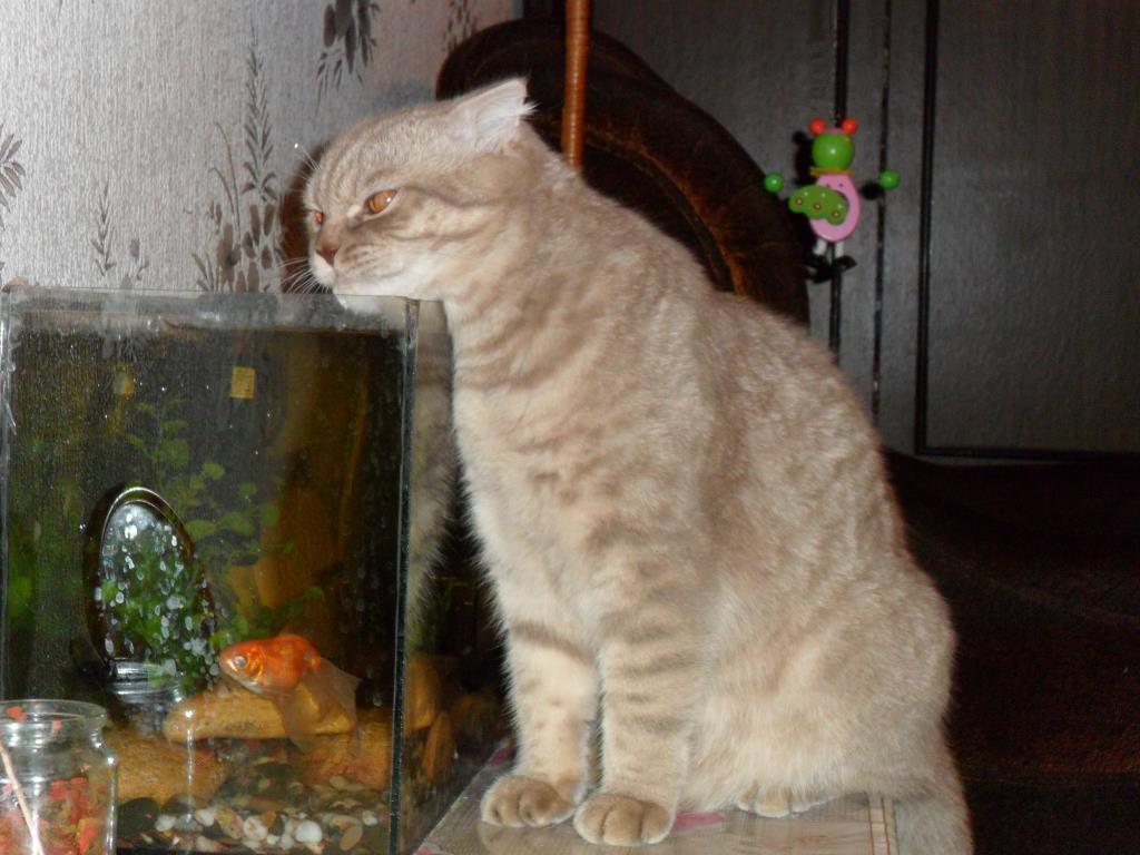 домашняя рыбалка. Блиц: вода