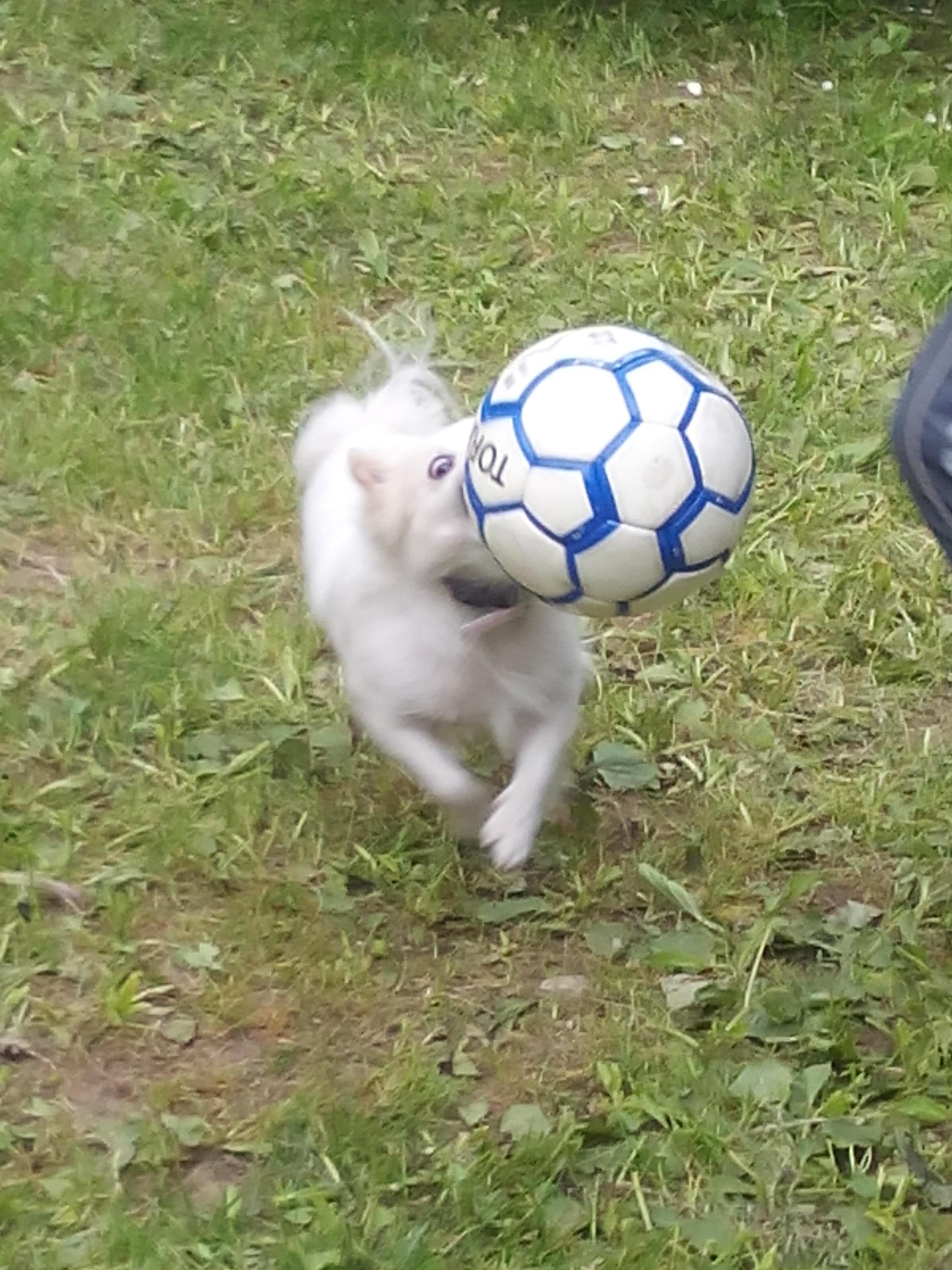 Удар,голооол!. Моя маленькая собака