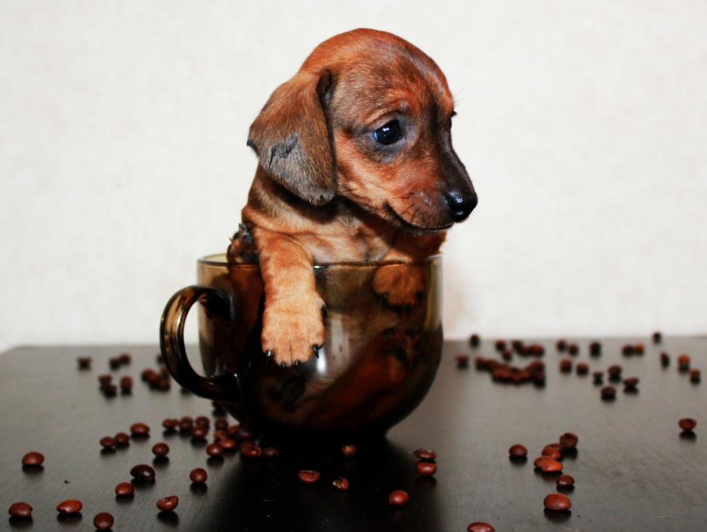 Флешка в чашке. Моя маленькая собака