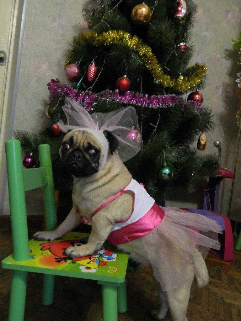 Бася. Моя маленькая собака