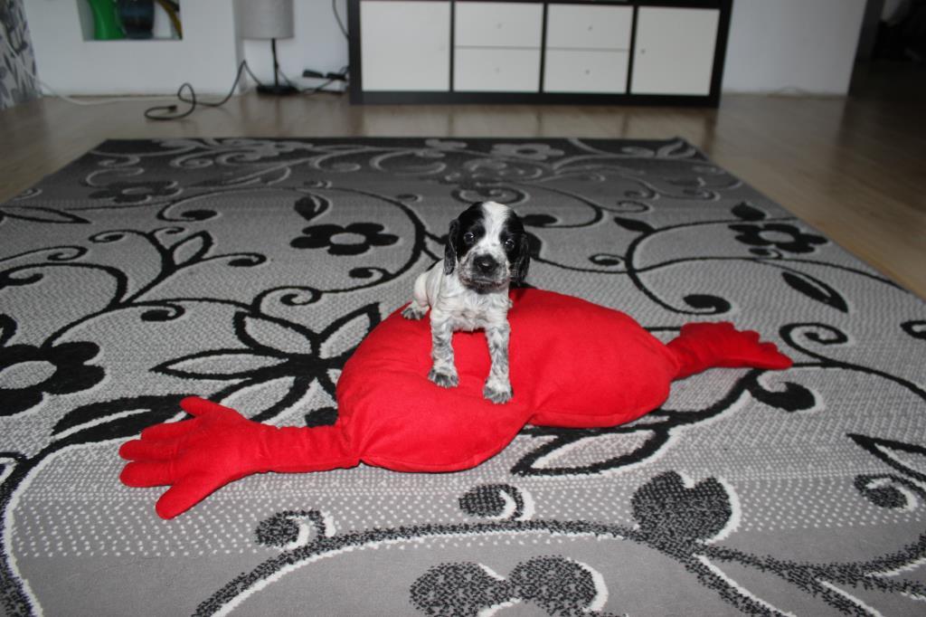 Наш барбосик, наша гордость!!. Моя маленькая собака