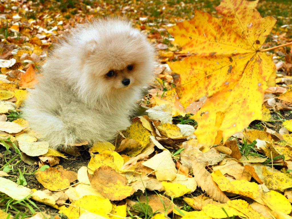 Меньше листика.... Закрытое голосование фотоконкурса «Моя маленькая собака»
