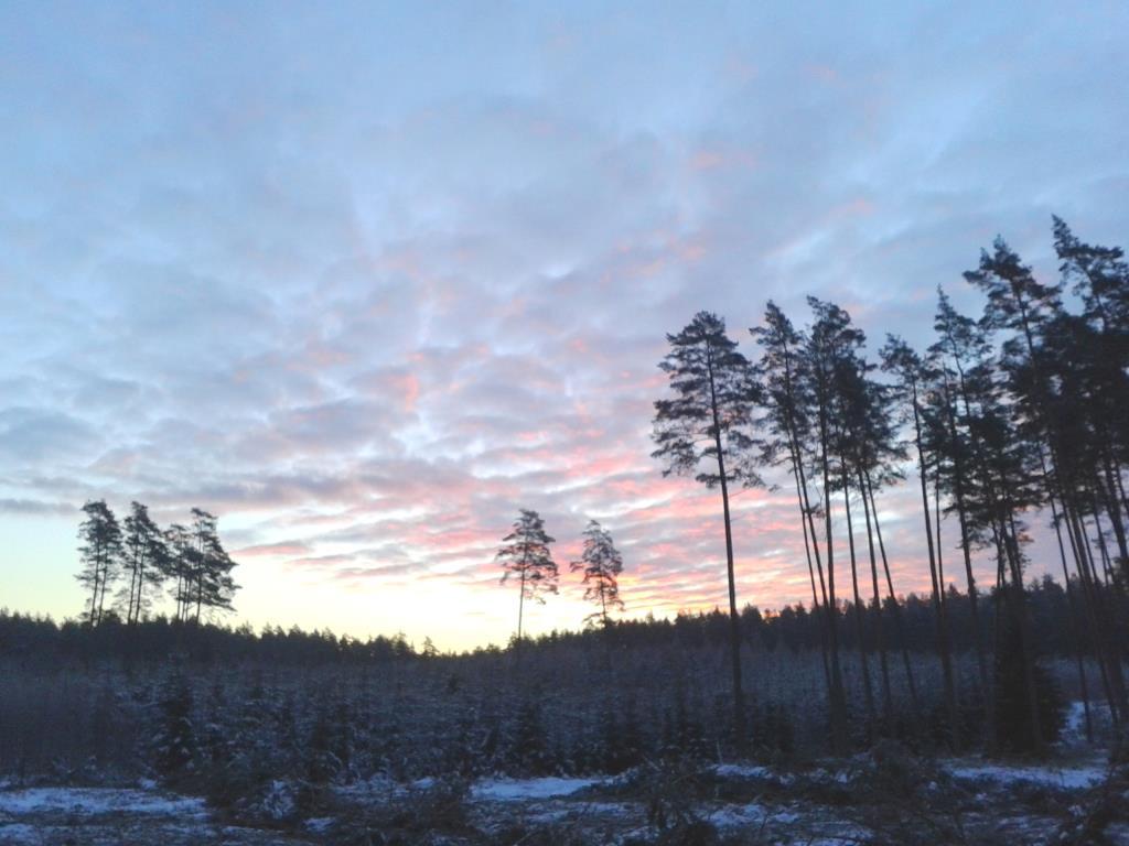 Рассвет в лесу. Лесной пейзаж