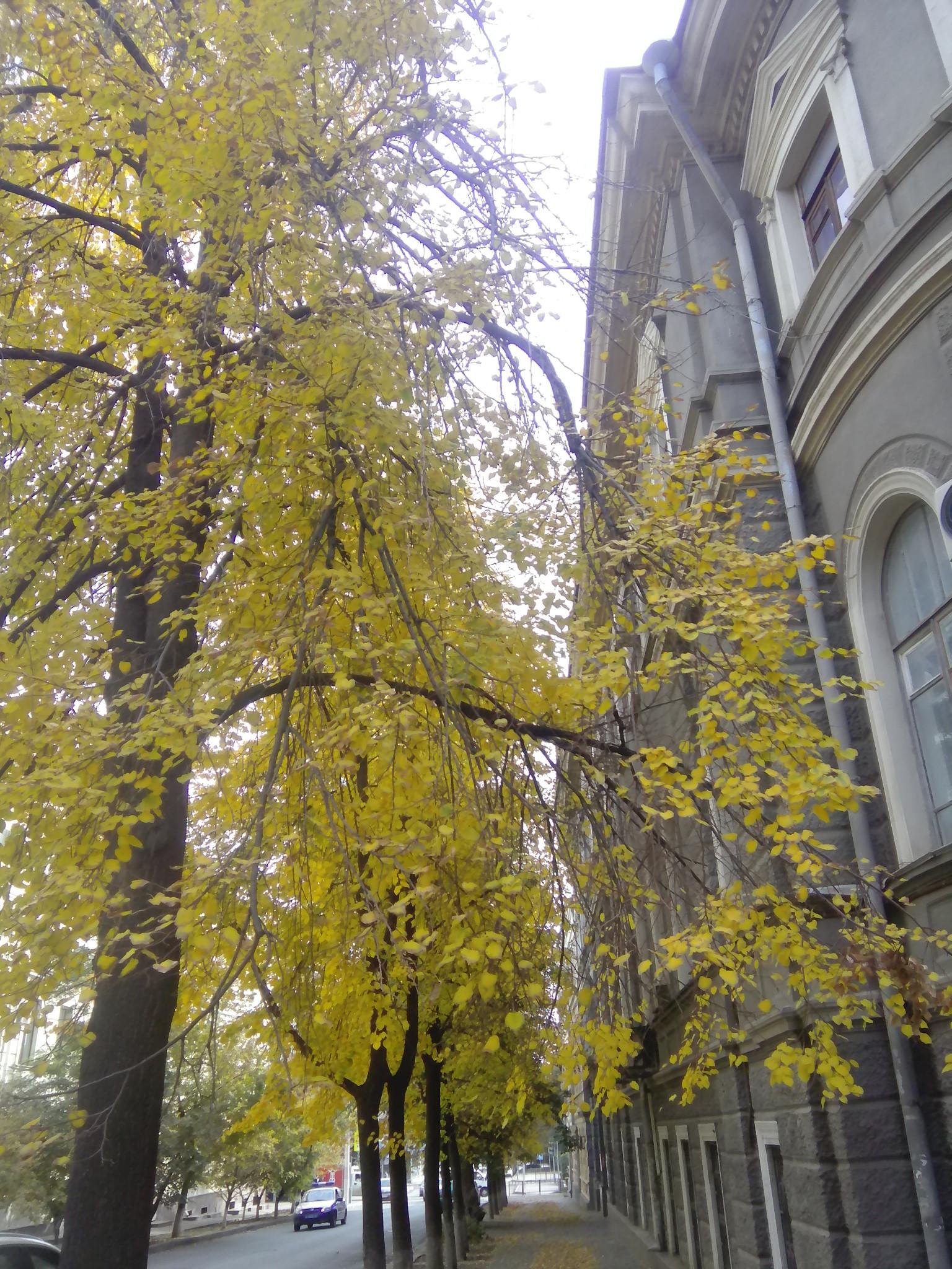 Жёлтенькое дерево, а рядом серый дом! :). Блиц: осенний пейзаж