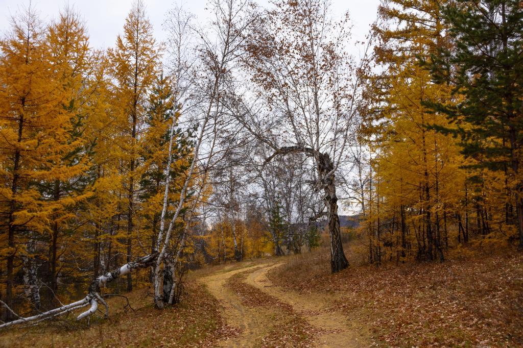 Ворота в осень. Блиц: осенний пейзаж