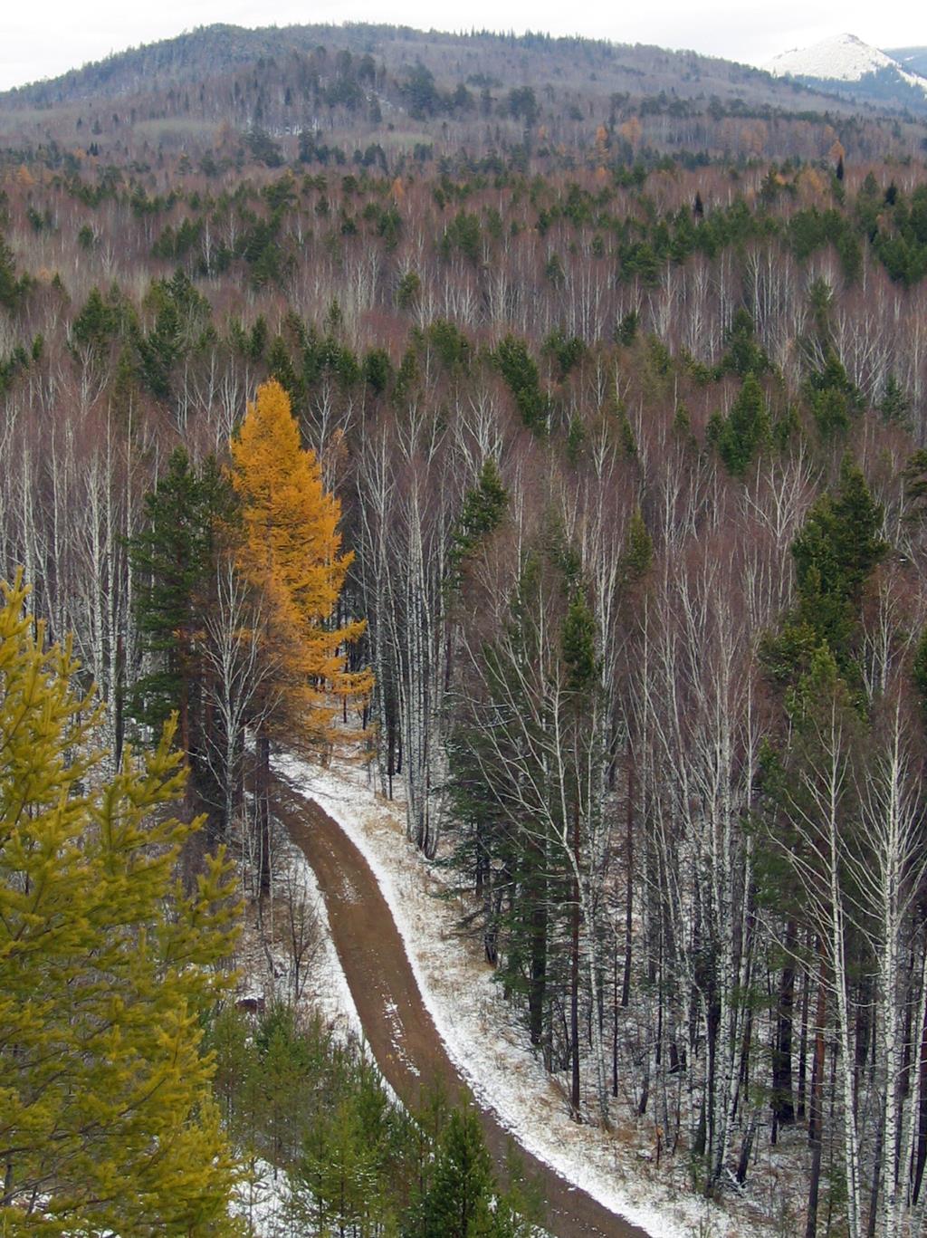 Осенняя дорога. Блиц: осенний пейзаж