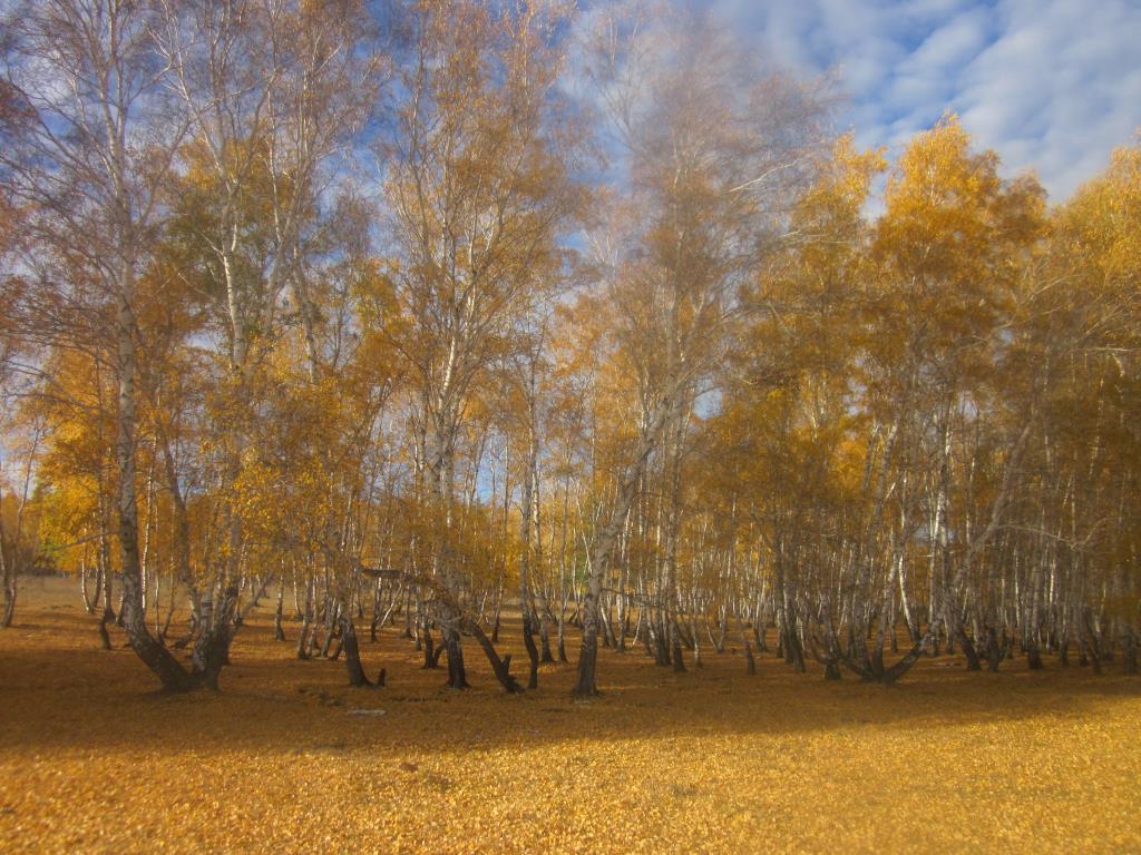 Осень...Разве не прекрасна. Блиц: осенний пейзаж