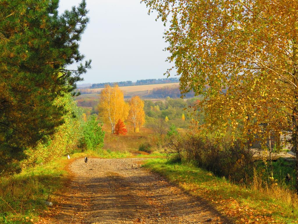 сельская дорога. Блиц: осенний пейзаж