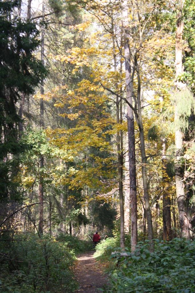 Осень 2016. Блиц: осенний пейзаж