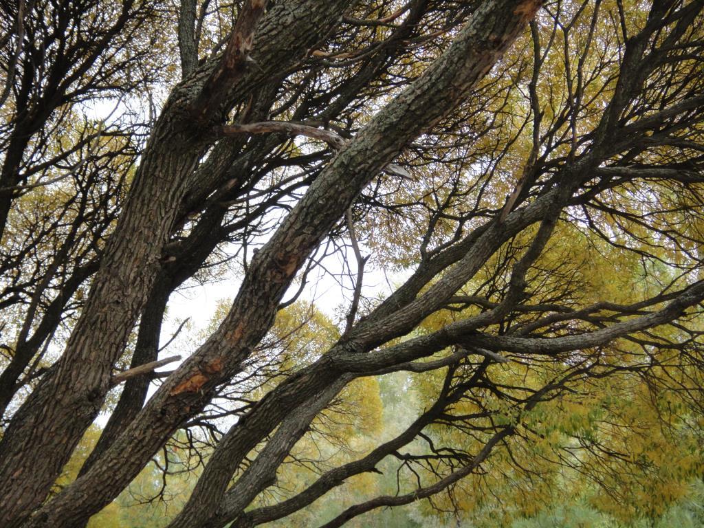 Старое дерево. Блиц: осенний пейзаж