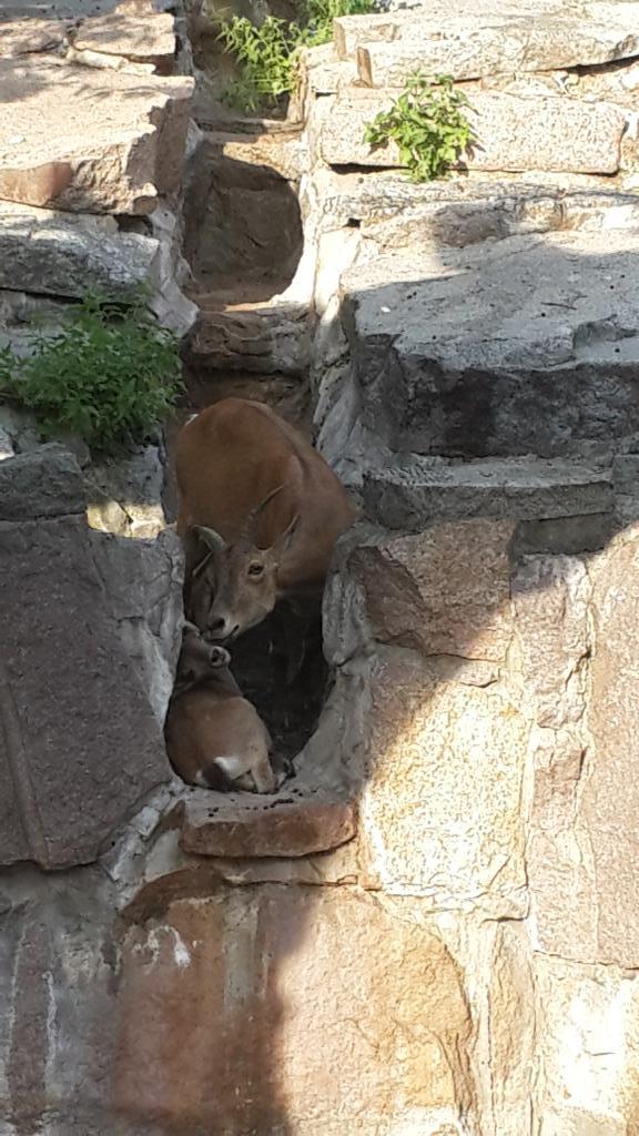 Мамин поцелуйчик. . Блиц: дикая фауна