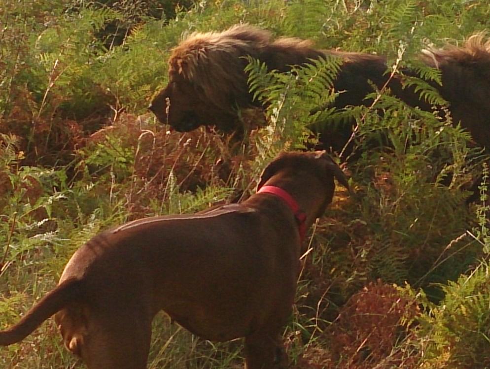 В джунглях мы тоже становимся дикими.... Блиц: дикая фауна