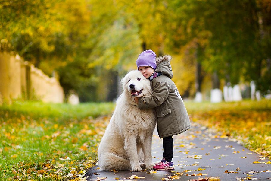любимый пес. Зверье моё