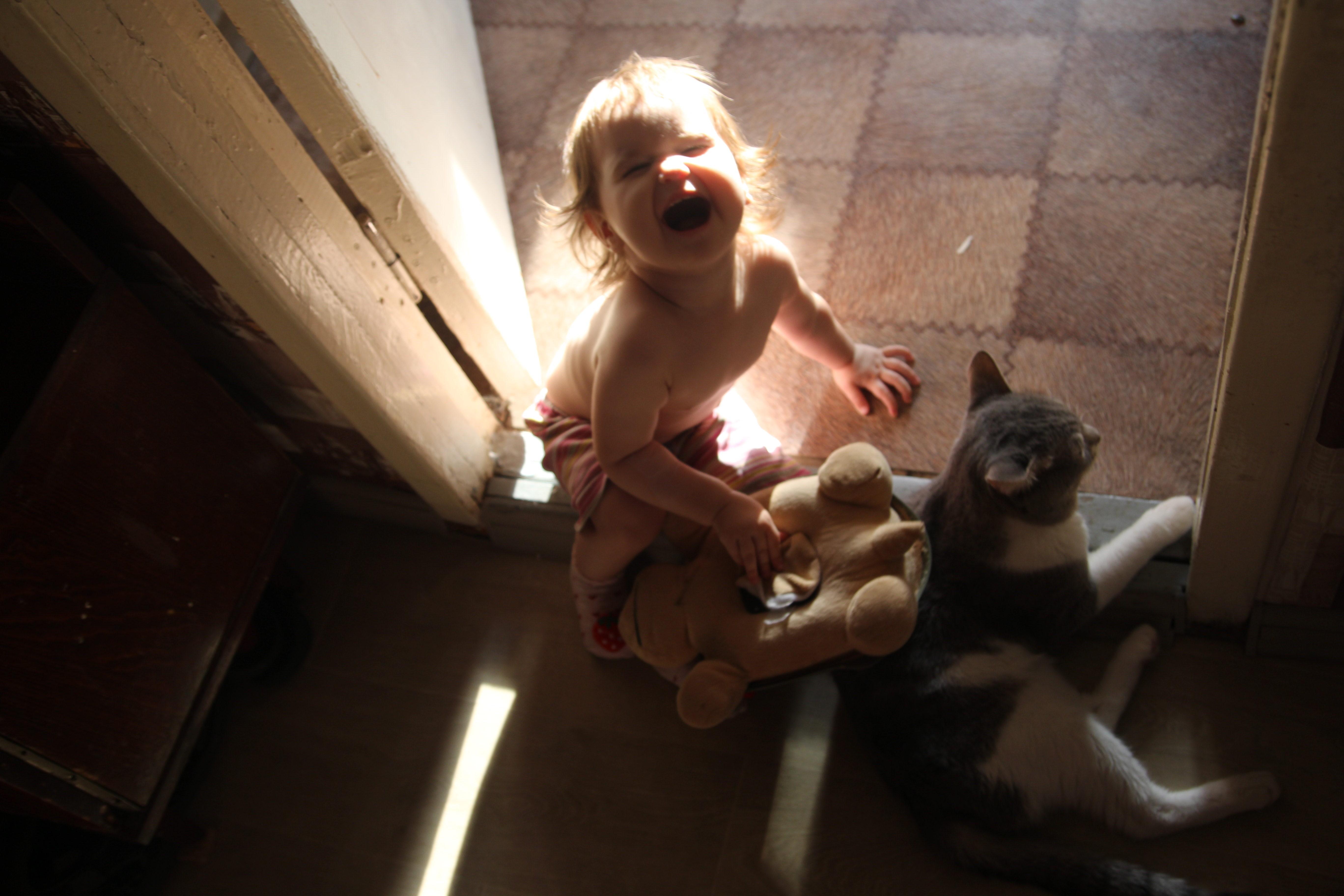Алиса и кот Пепсик.. Зверье моё