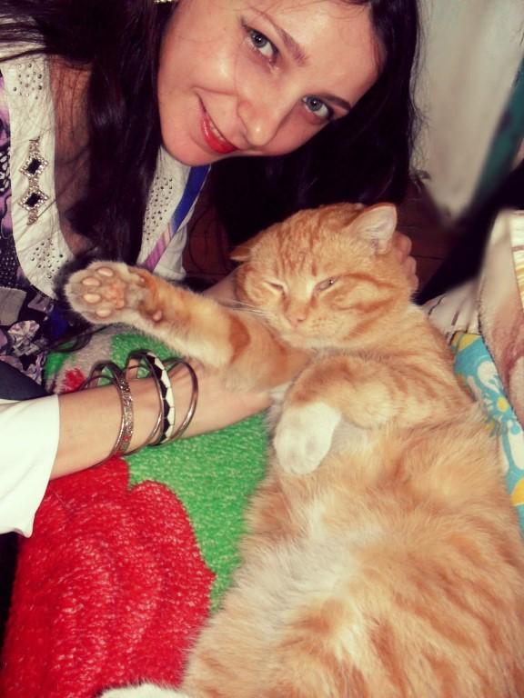 Рыжий кот. Зверье моё