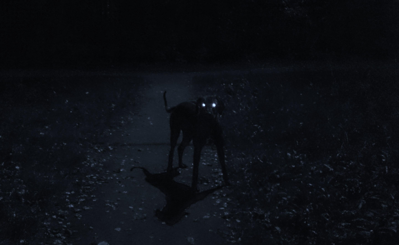Почему собака лает ночью в пустоту
