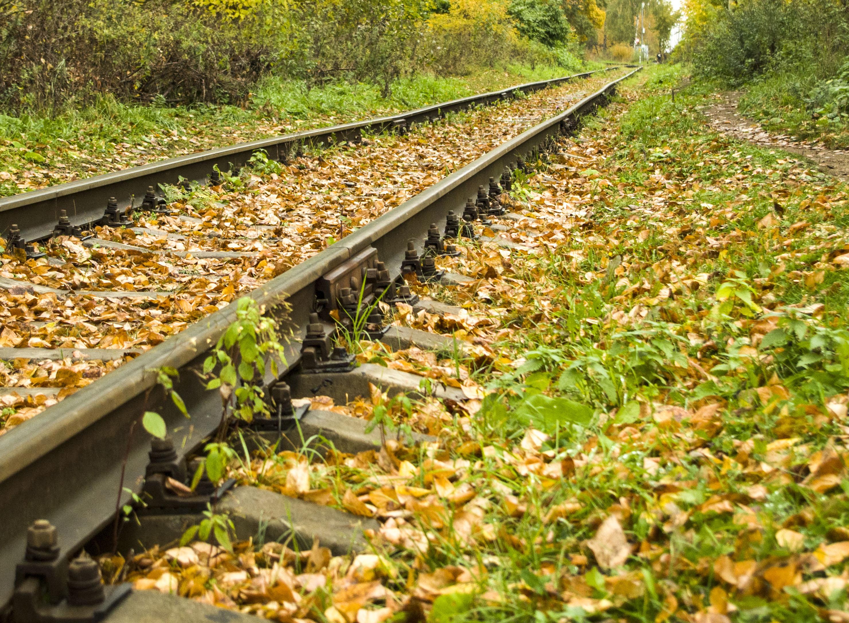 Осенний путь.. Блиц: осенний пейзаж