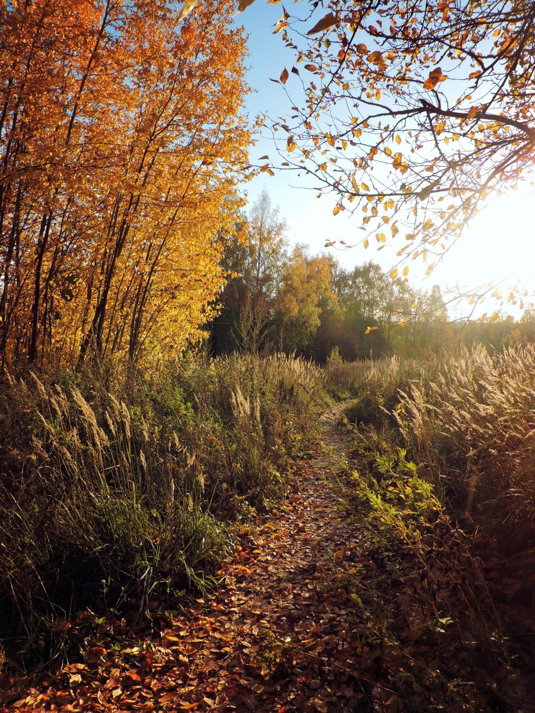 Золотая Осень . Блиц: осенний пейзаж