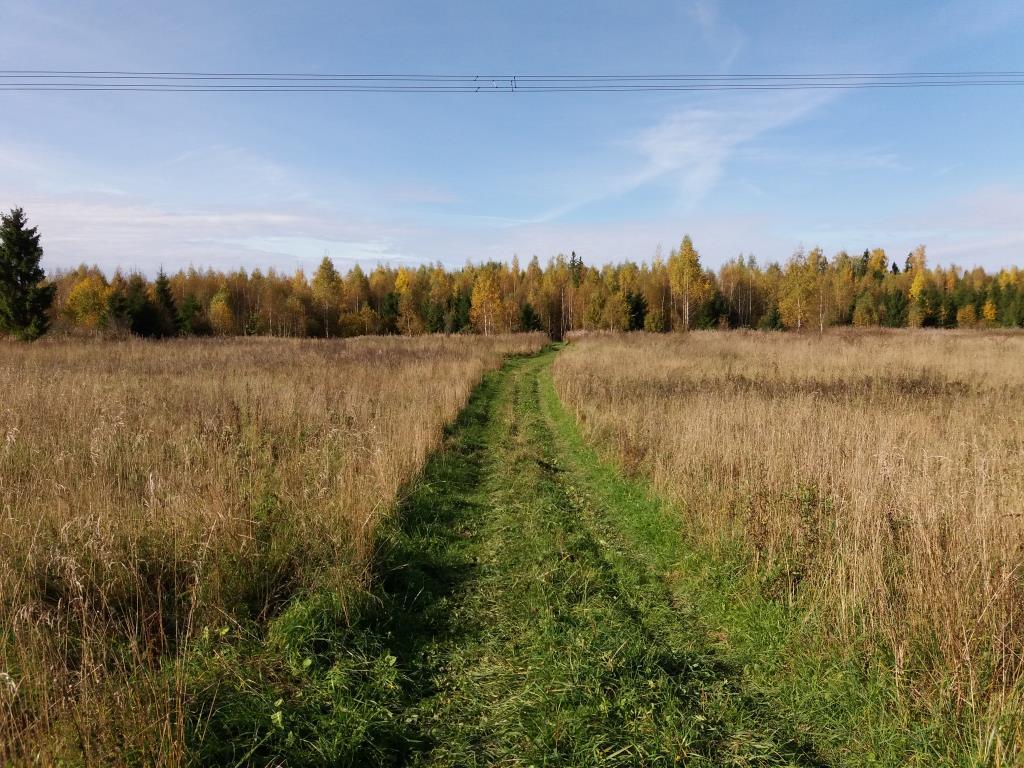 Осень. Блиц: осенний пейзаж
