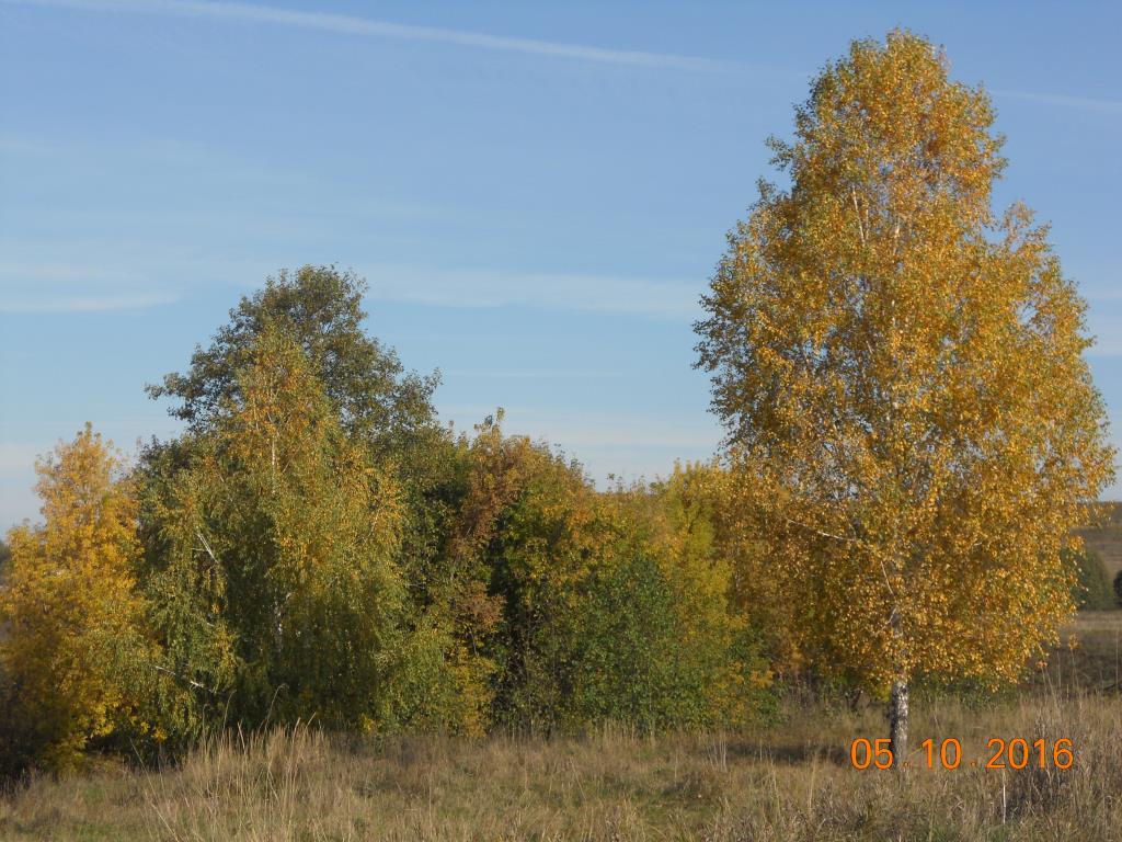 Осень в деревне. Блиц: осенний пейзаж