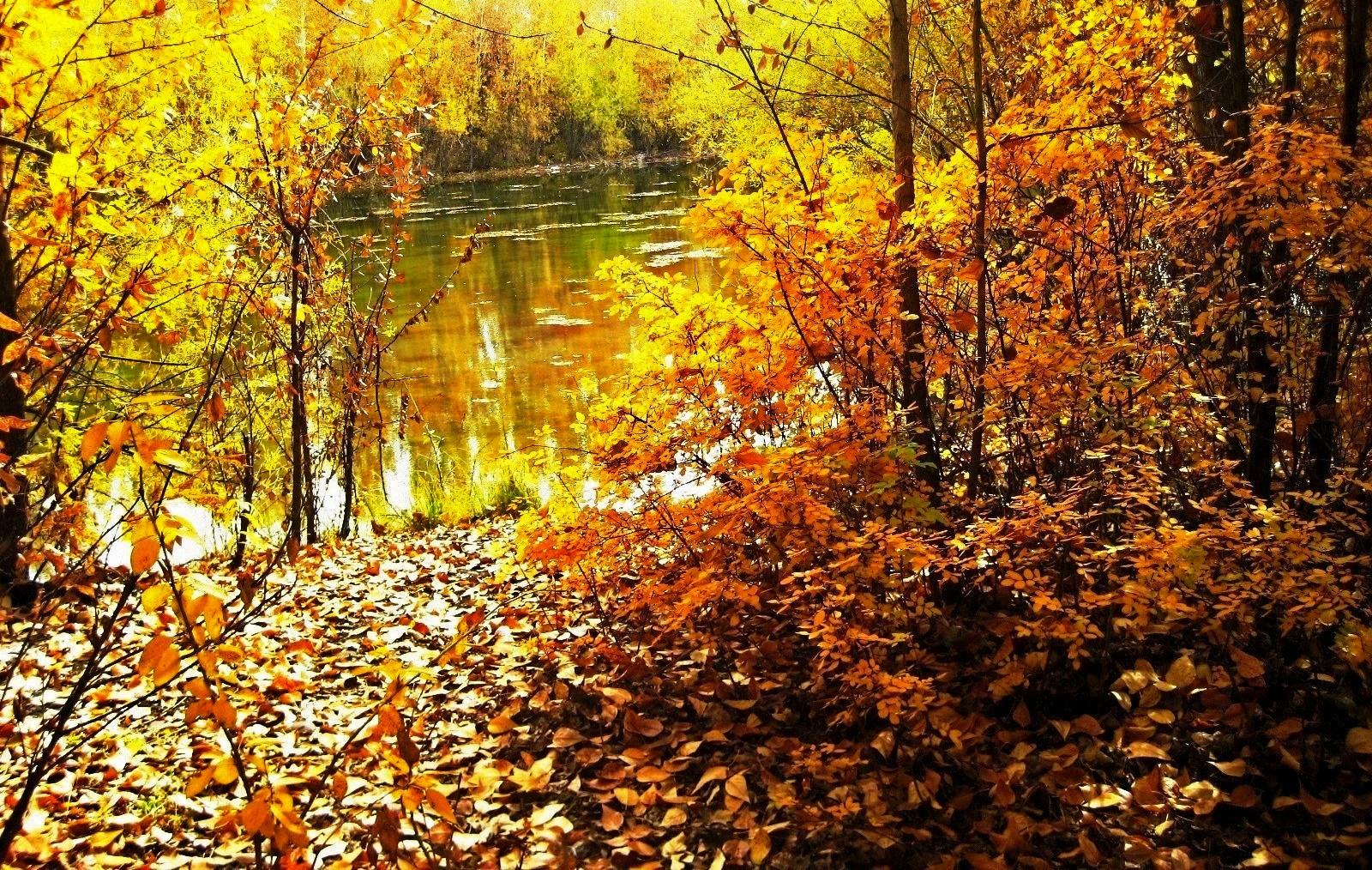 Осенний пруд. Блиц: осенний пейзаж