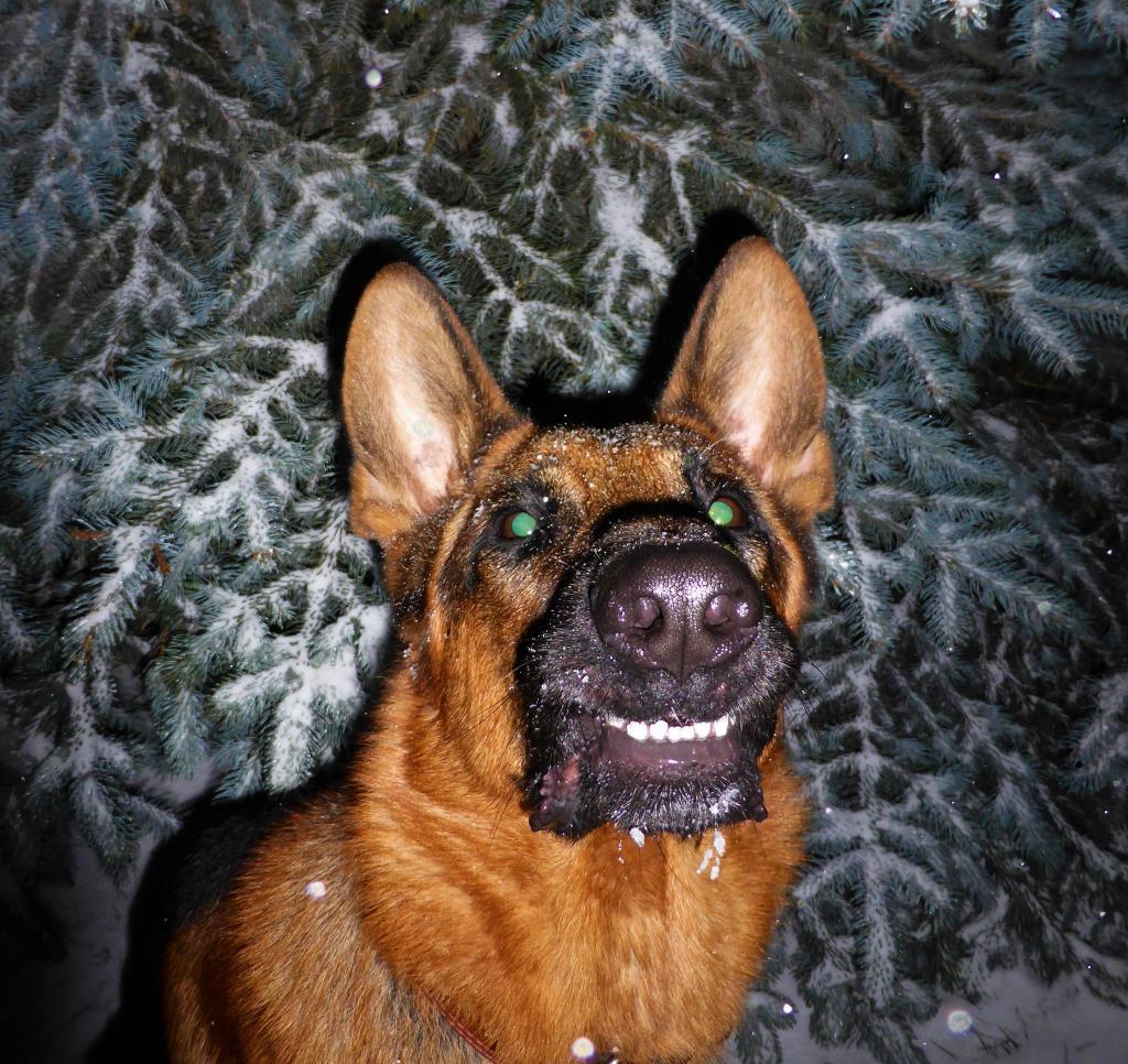 Собака-Улыбака. Блиц: кошки против собак