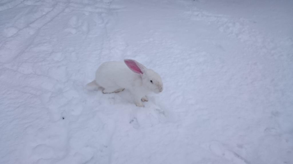 Снежок. Блиц 'Первый снег'