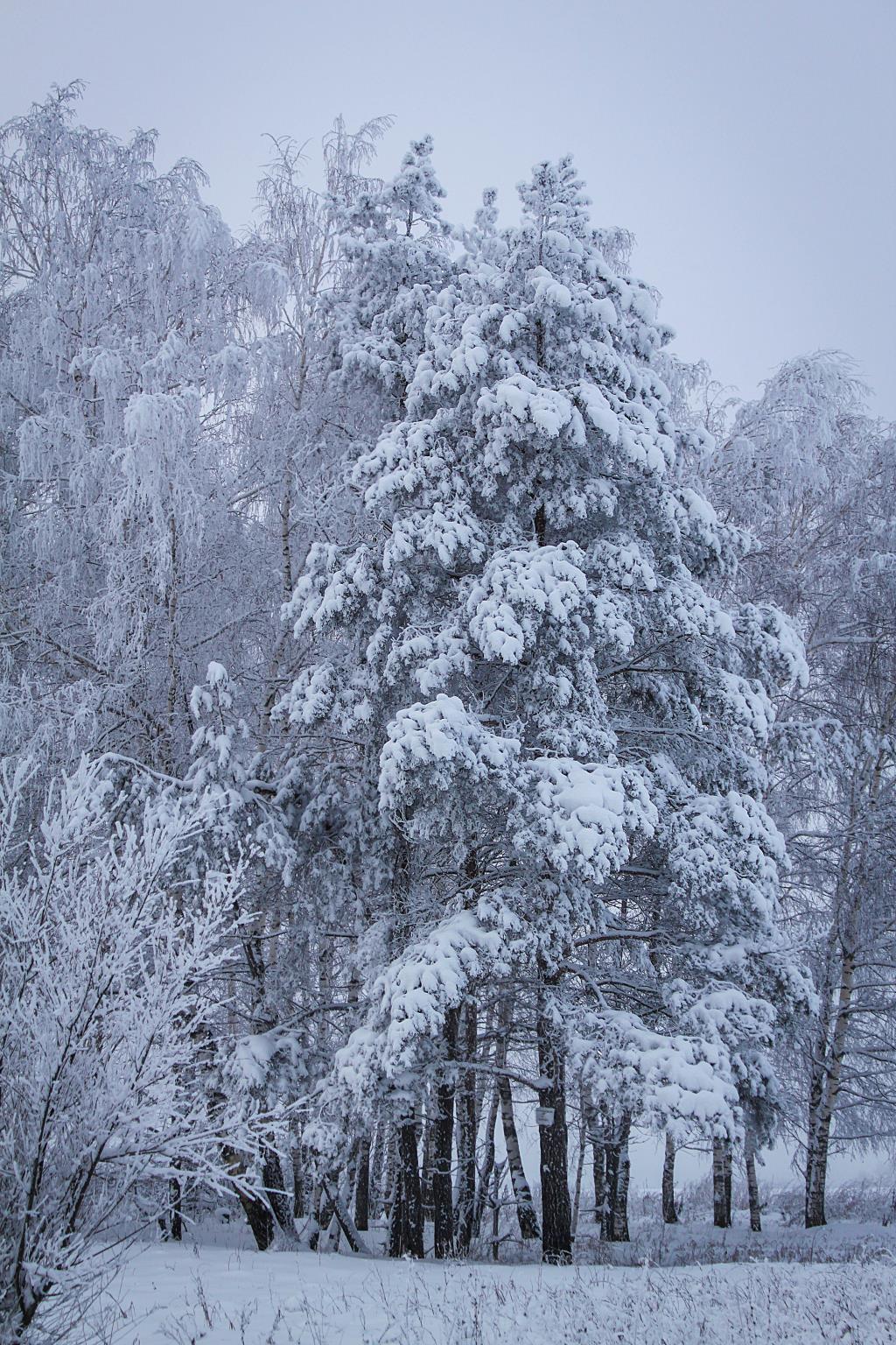 зимний ноябрь. Блиц 'Первый снег'
