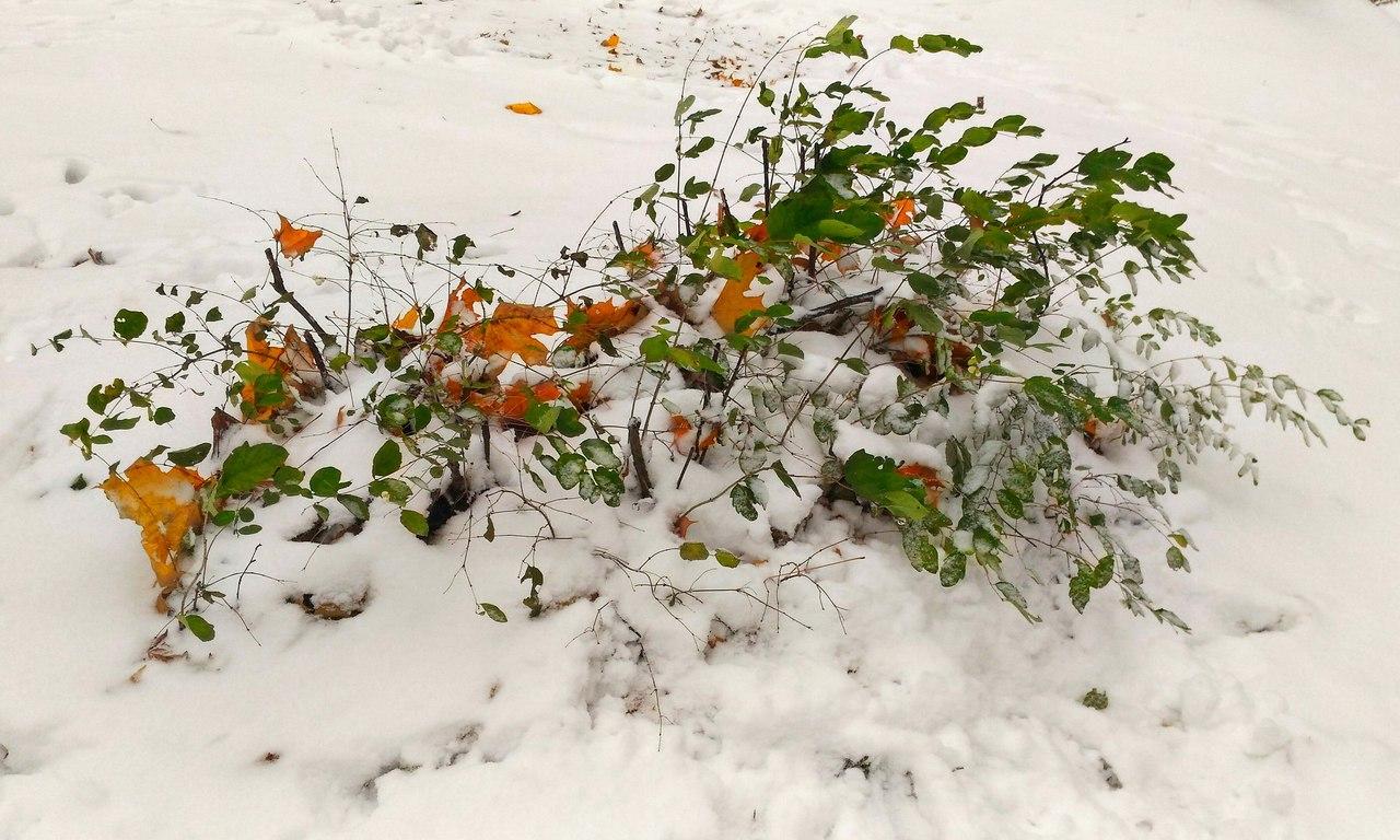Первый снег в Череповце. Блиц 'Первый снег'