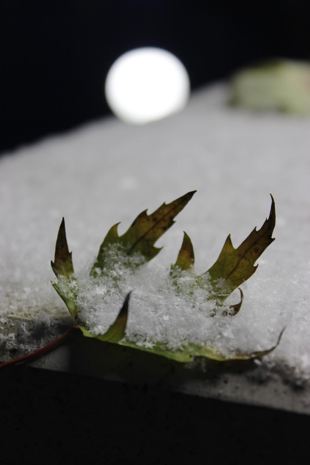 В ладошке у осени.... Блиц 'Первый снег'