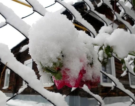 ''Снежная лошадка''. Блиц 'Первый снег'