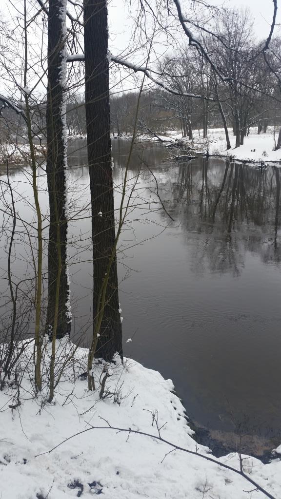 Первый снег.Лес. Блиц 'Первый снег'