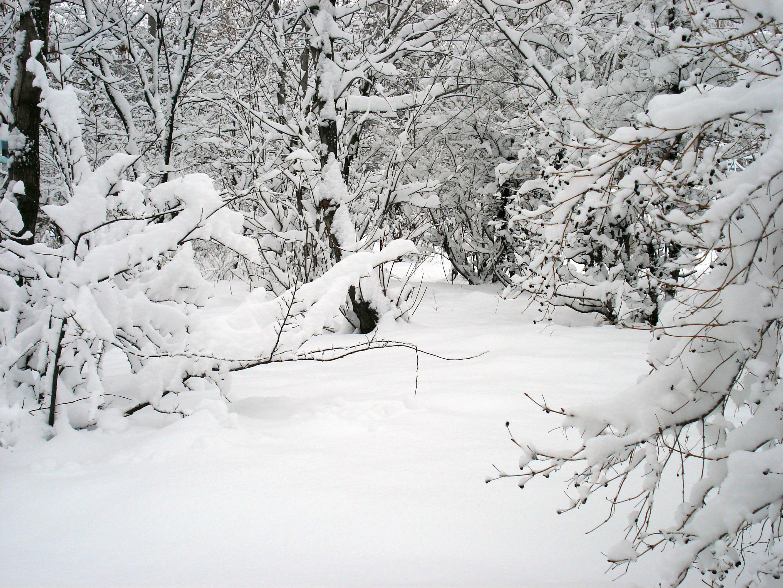 Белое. Блиц 'Первый снег'