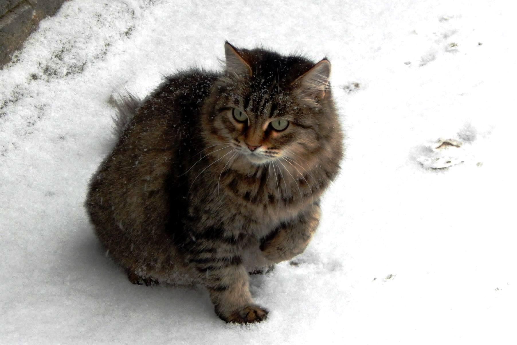 В такой шубке и снег в радость. Блиц 'Первый снег'